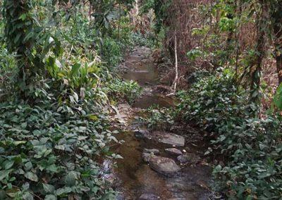 ein-bach-im-regenwald