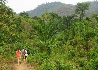 ab-in-den-regenwald