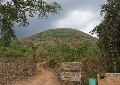 auf-dem-weg-regenwald