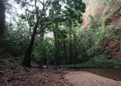mitten-im-regenwald